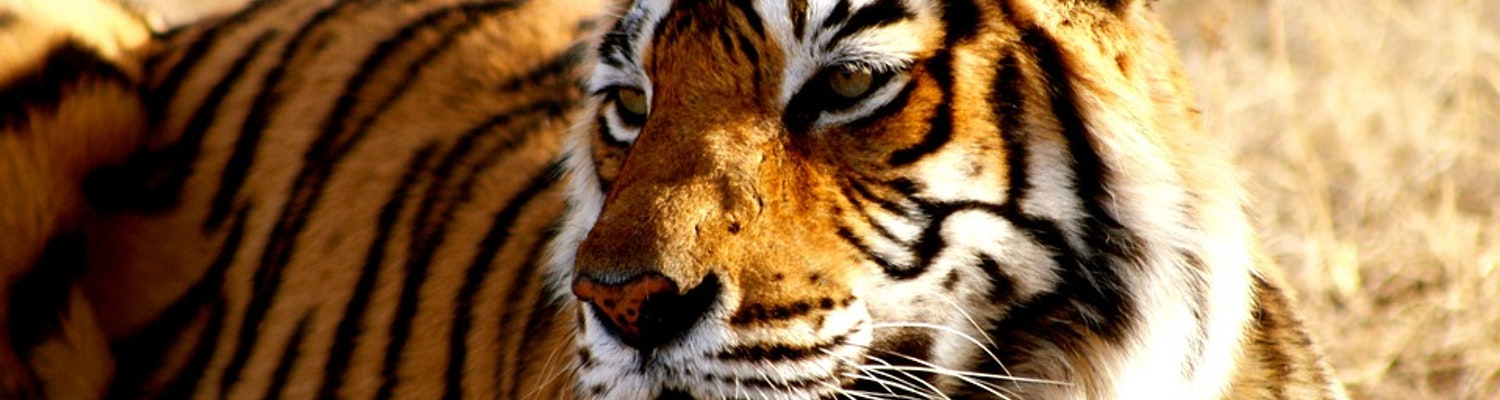 Manas Tiger Reserve in India