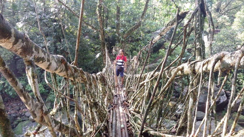 a climber on the root bridge