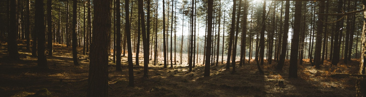 New Forest United Kingdom