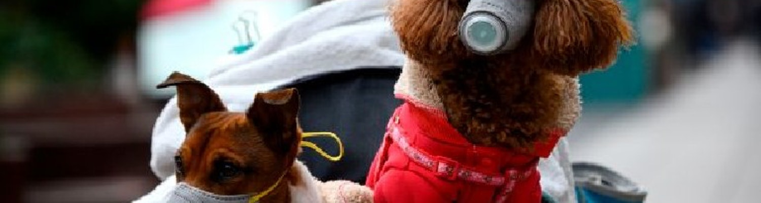 dogs being safeguarded with a mask