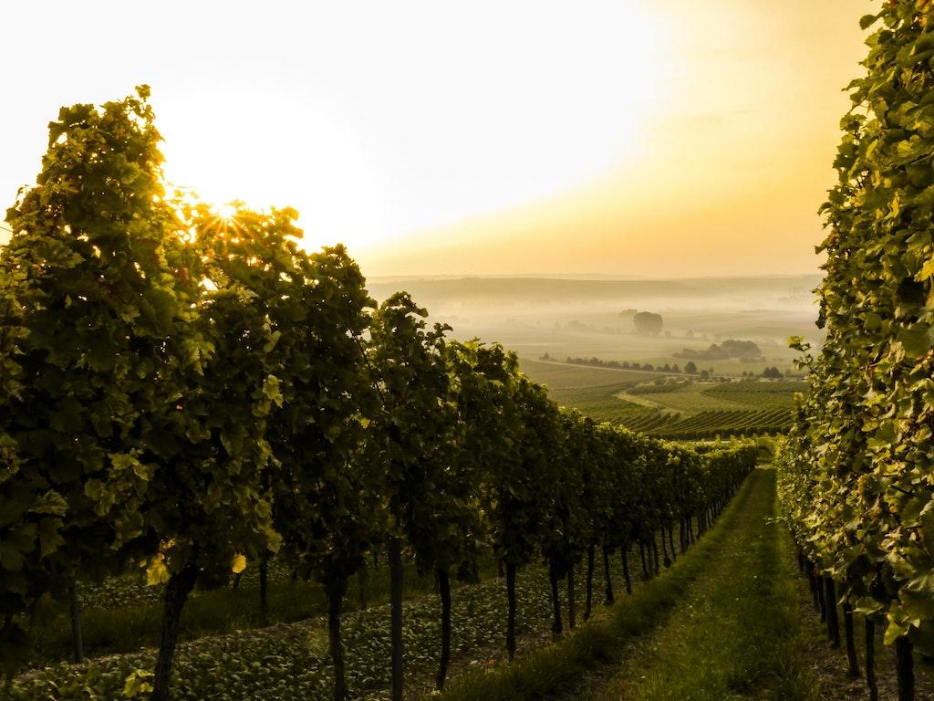 Empordà Wine Route