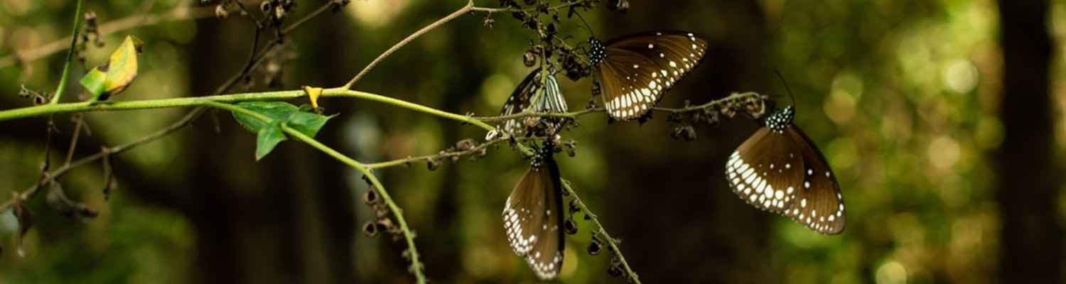 butterflies at the Tourist places in Dandeli