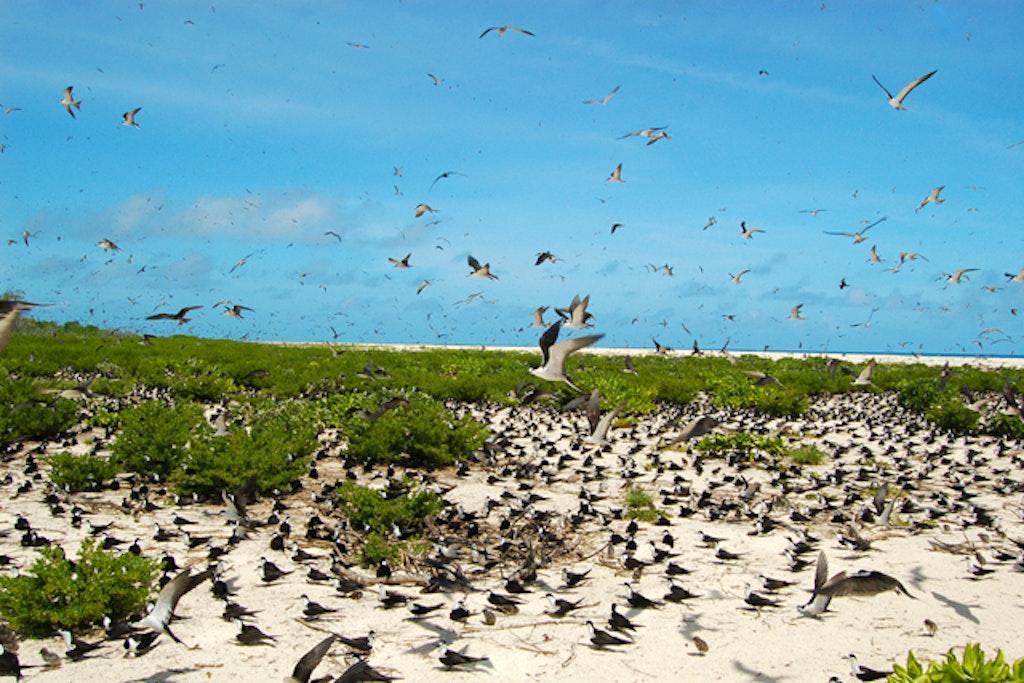 Bird Island Lodge in Bird Islands.