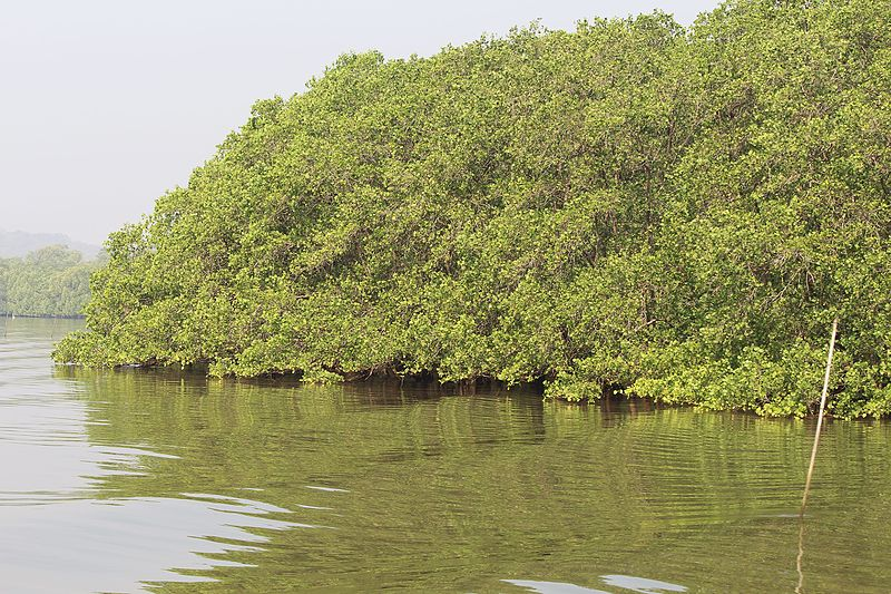 Salim Ali Bird Sanctuary in Kerala.