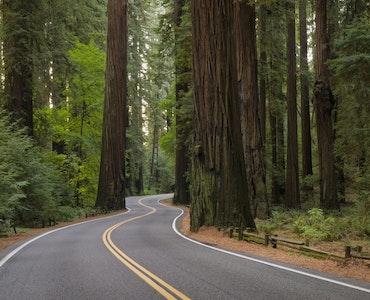 Redwood Highway (California 101)
