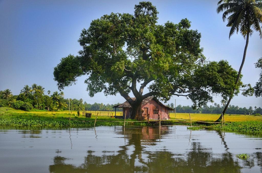 Alleppey Back waters, Kerala