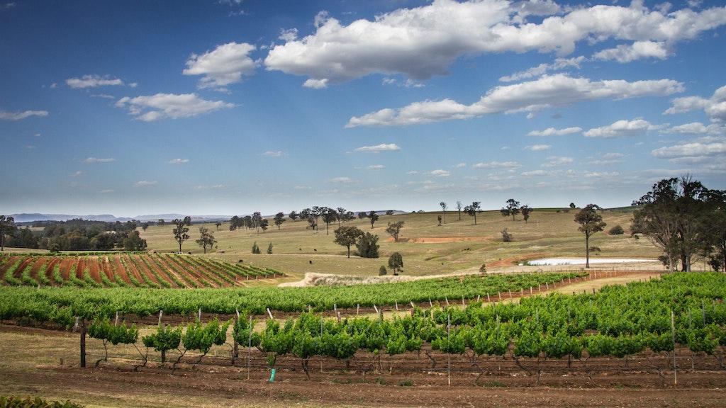 Wine Tasting in the Hunter Valley
