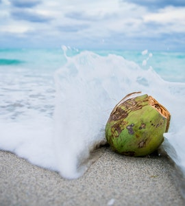 A coconut in the beach