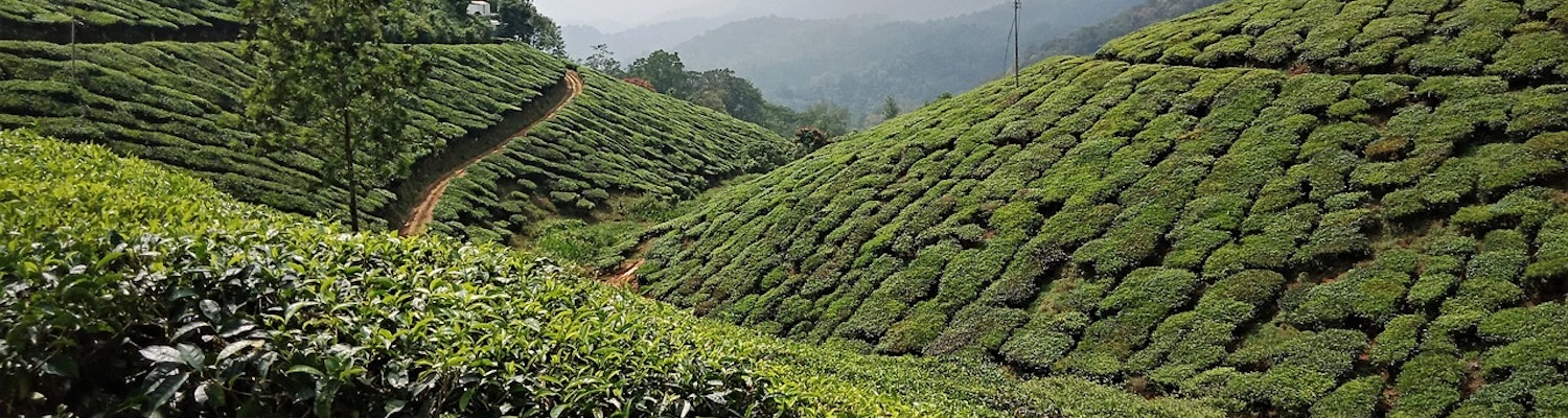 Weather in Munnar