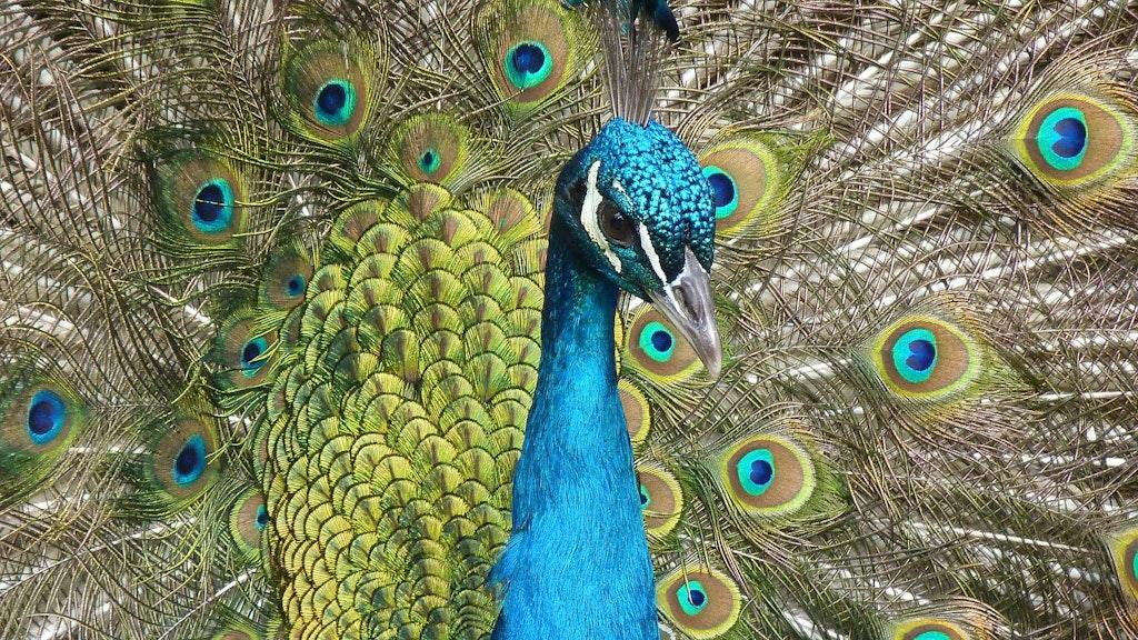 Adichunchanagiri Peacock Sanctuary,