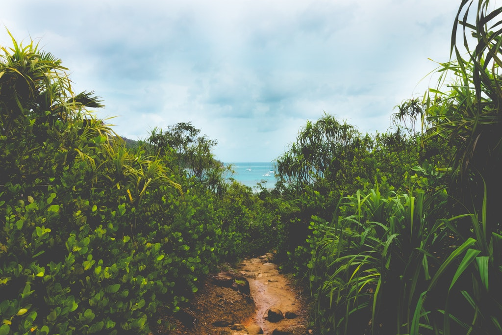 Grass in Seychelles