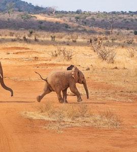 5 Best Safari Tours in Kenya