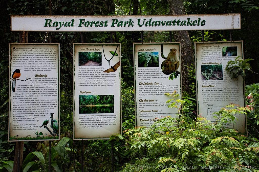 Udawatta Kele Sanctuary near Kandy Lake, Sri Lanka