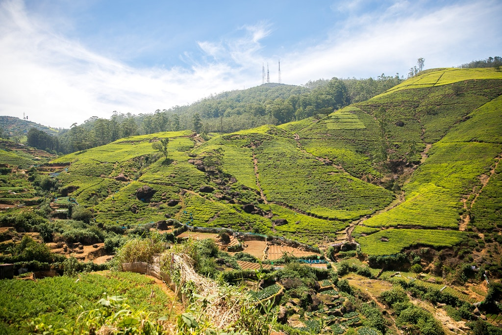 Beautiful landscape of Nuwara Eliya in Sri Lanka