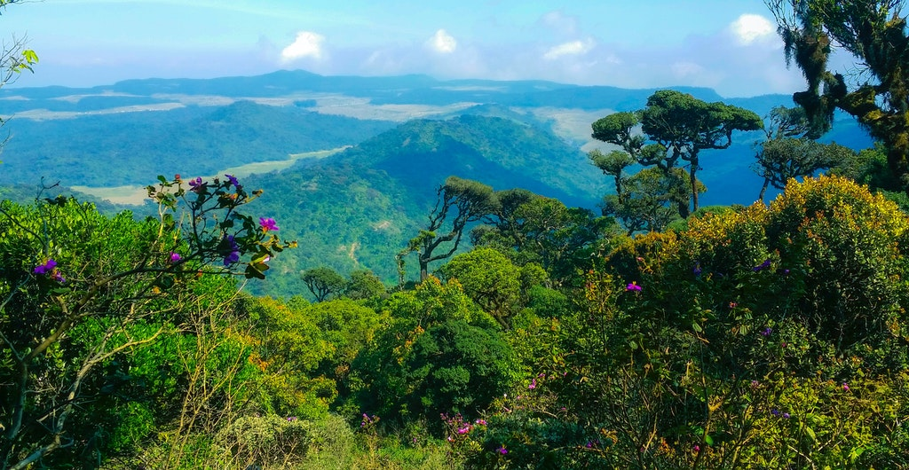 A scenic view in Horton Plains National Park