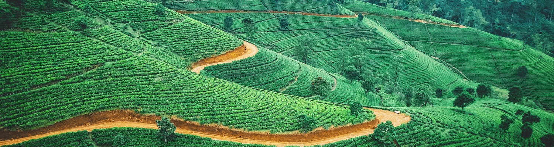 Sri Lanka in June