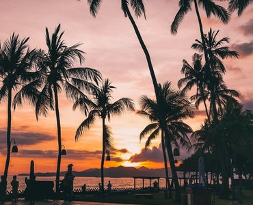 silhouette image of palm trees