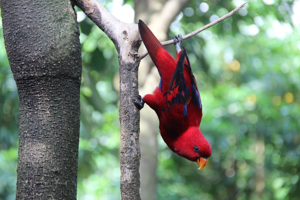 Wildlife Bali