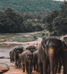 brown elephants