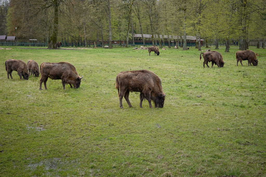 Bialowieza National Park, Poland, National Parks to Visit in Europe