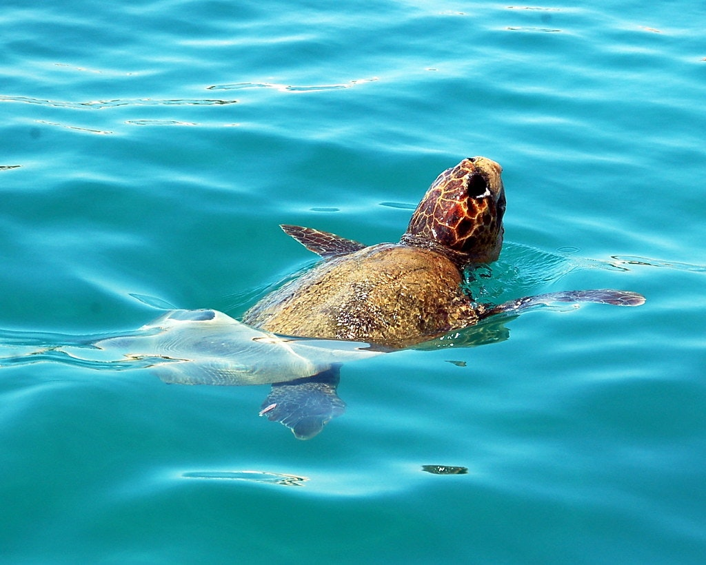 Zakynthos National Marine Park, Best Parks In Greece