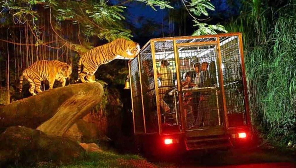 Bali Night Safari and Marine Park, Things to do in Bali in November