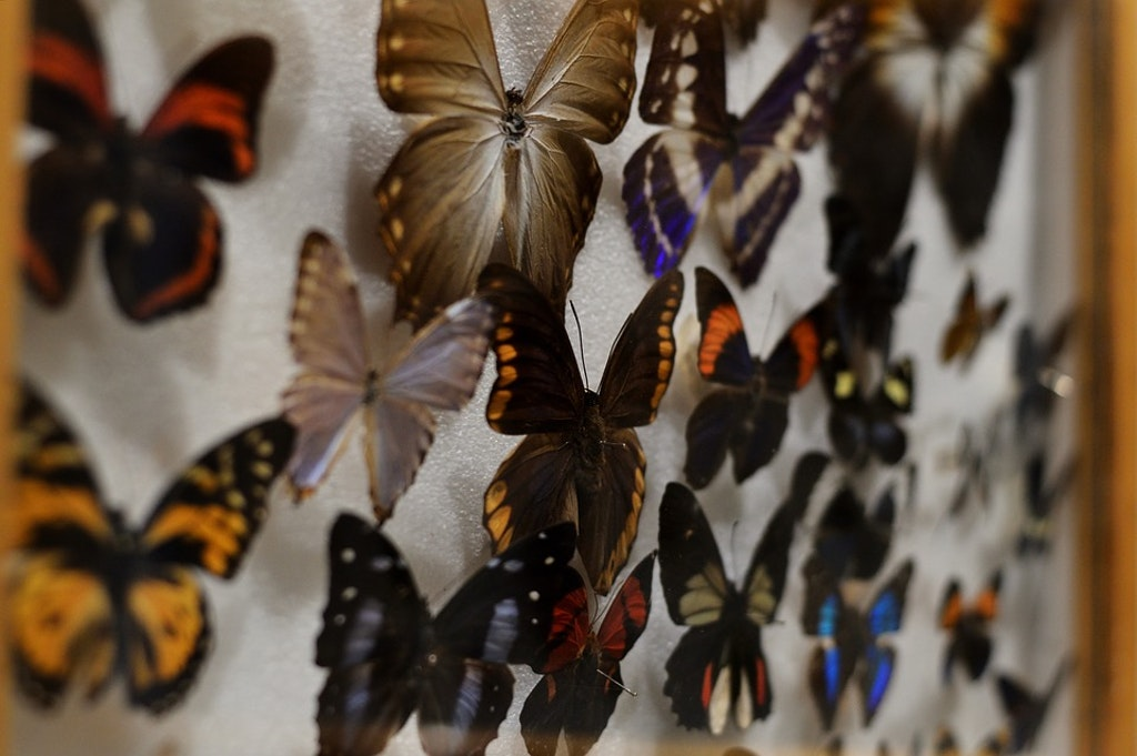 Maison des Papillons (Butterfly Museum), Things To Do In St Tropez