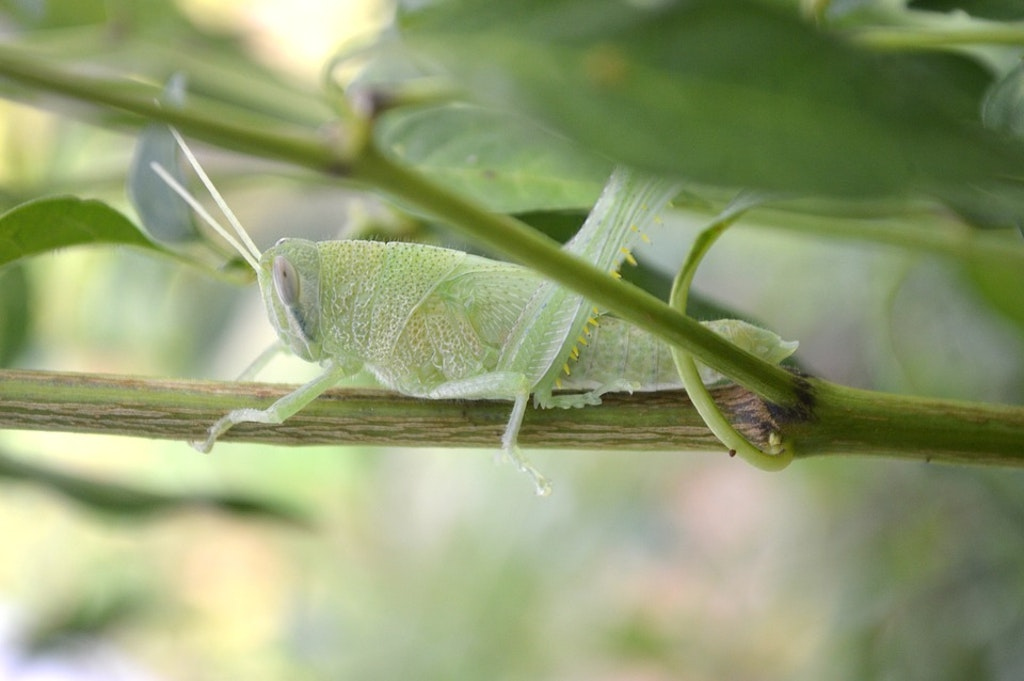 insect, Best National Parks in France