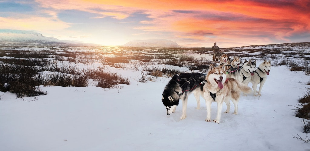 Dog Sledding, Adventurous Things To Do In Iceland