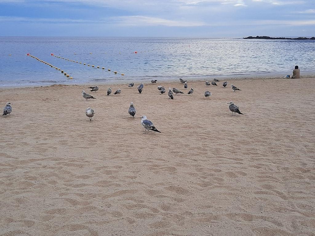 paloma-beach - best beaches in France