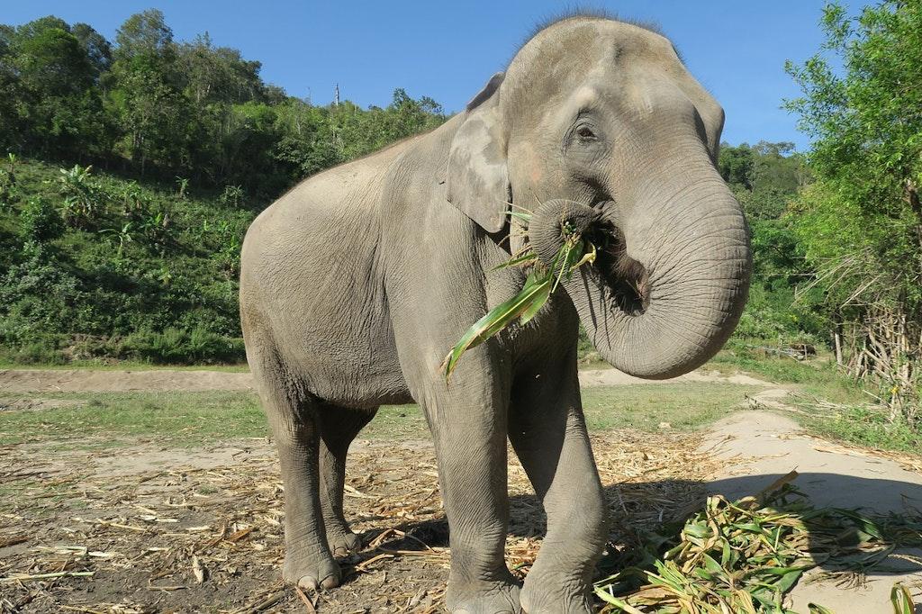 Santuario de elefantes de Chiang Mai: lugares para Instagram en Tailandia