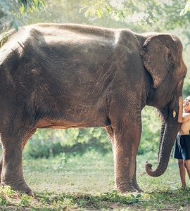 Things to do with Kids in Thailand