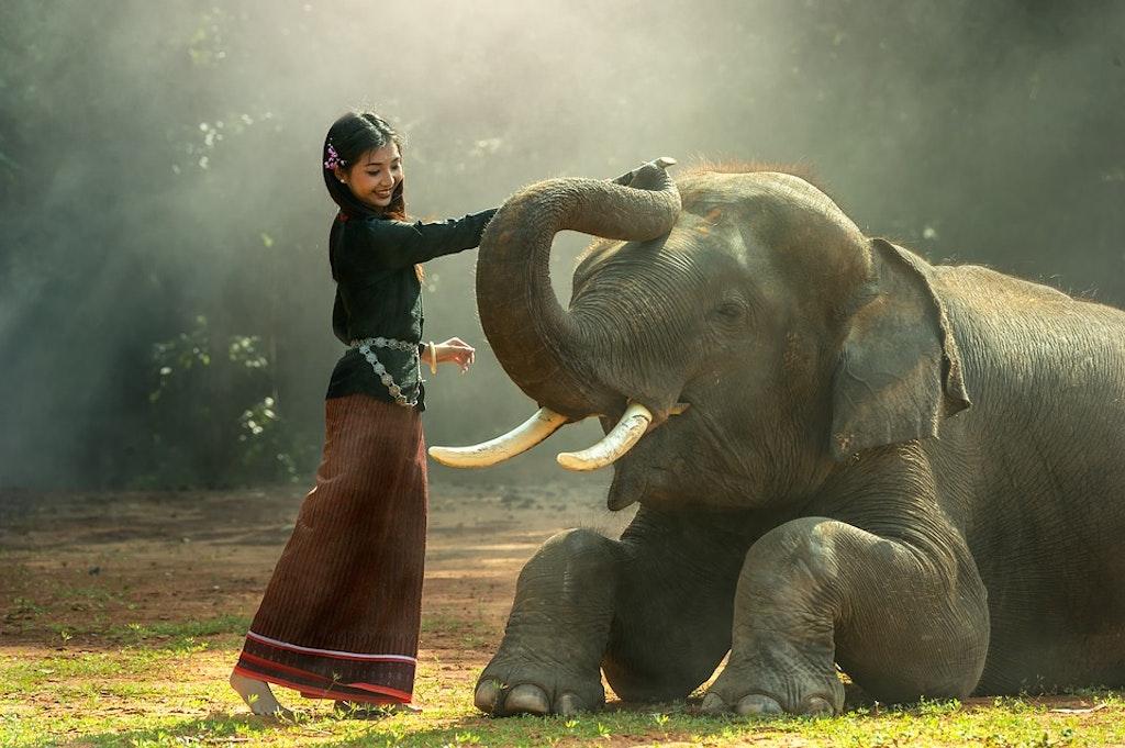 elephant-trunk