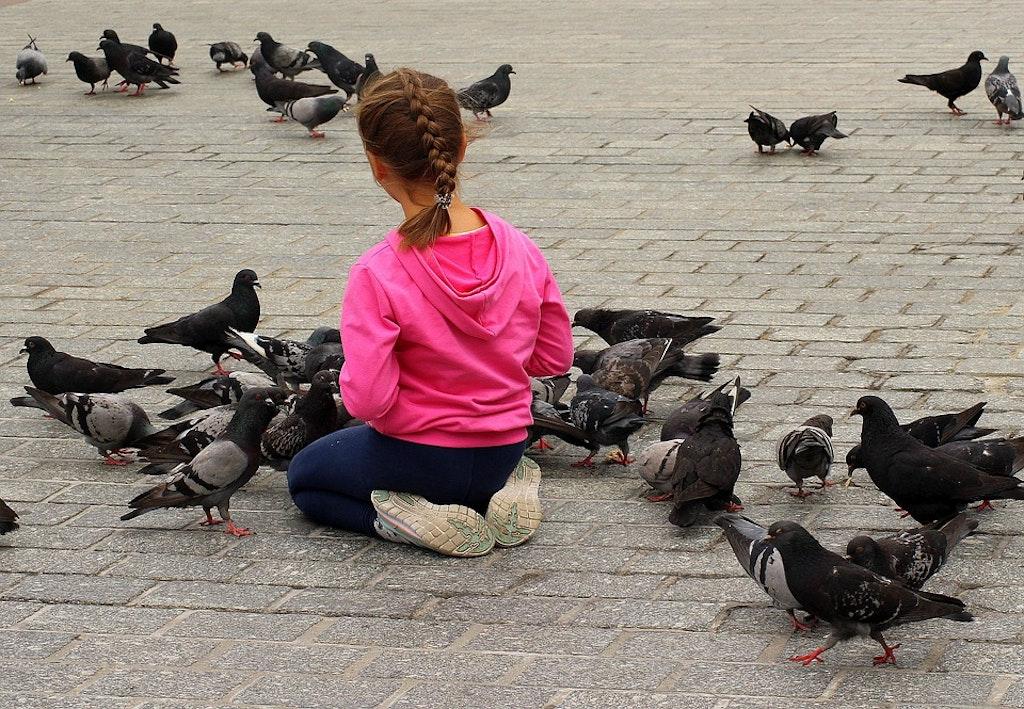 Avoid feeding pigeons in Italy