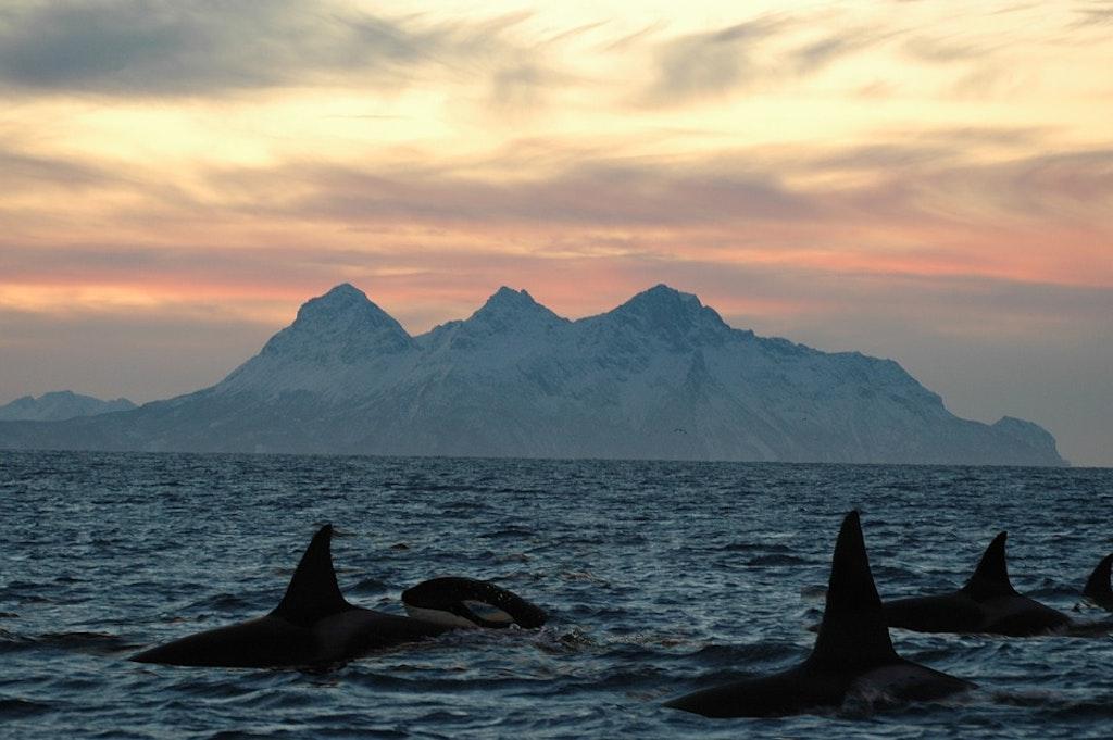 Avistamiento de ballenas en Lofoten